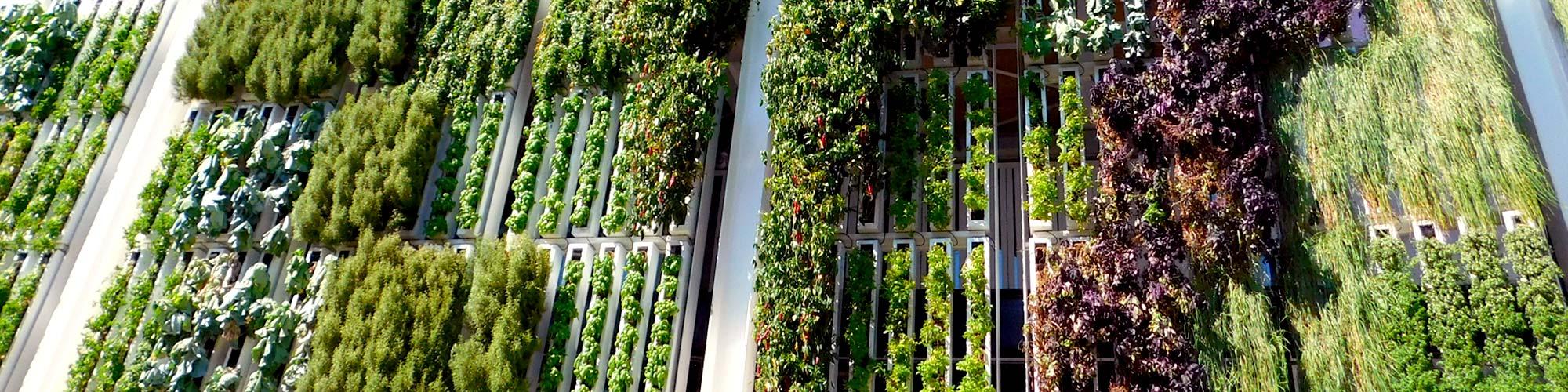 <p>Notre raison d'être : l'harmonie entre l'Homme, l'eau et les plantes.</p>